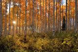 Warm Forest Glow print
