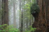 Misty Morning Hike print