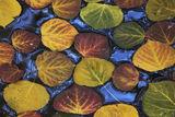 Autumns Arrangement print
