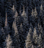 Frosty Forest print