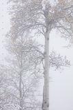 Ghost Tree print