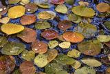 Autumns Assortment print