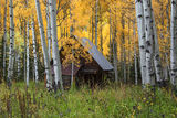 Fall Forest Cabin print