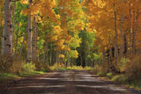 Country Road IV print
