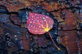 Rustic Leaf print