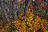 Colorful Scrub Oak  print