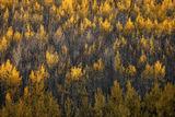 Colorado Wildfire print