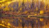 Meadow Reflection print