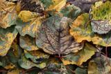 Autumns Legacy print