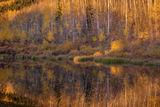Golden Reflection print