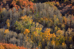 Hillside Harmony