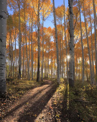 Colorado Aspen & Cottonwood Forests