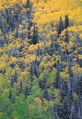 Spruce Divide
