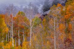 Autumn's Last Color