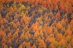 Colorado Wildfire II