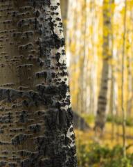 Colorado's Forest Details