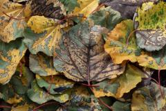 Autumns Legacy