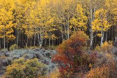 Autumns Zest