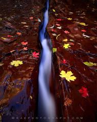 Zion National Park, Utah, subway, crack, fall colors