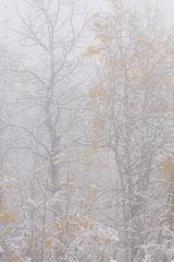 Framework of Fog