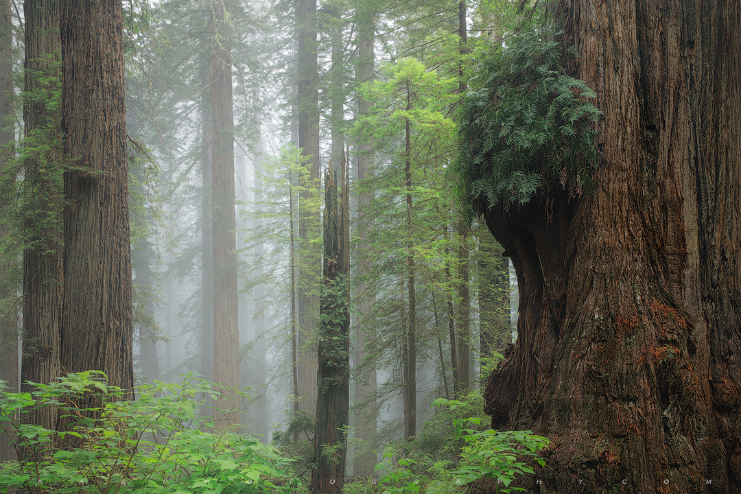 Misty Morning Hike