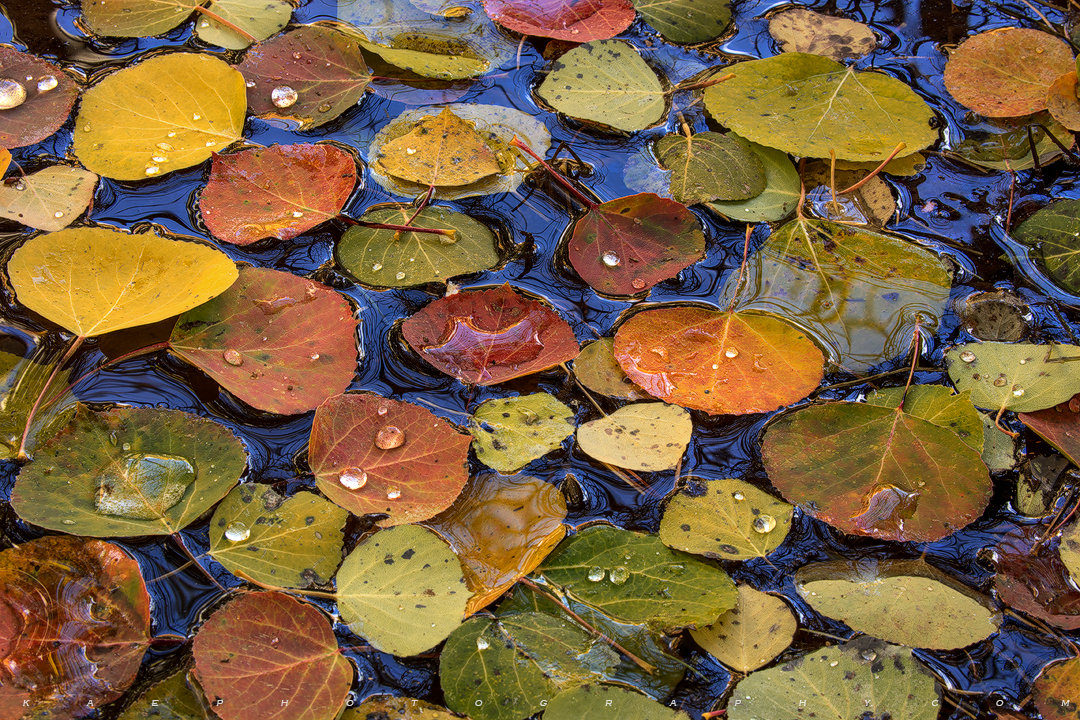 Autumns Perfection