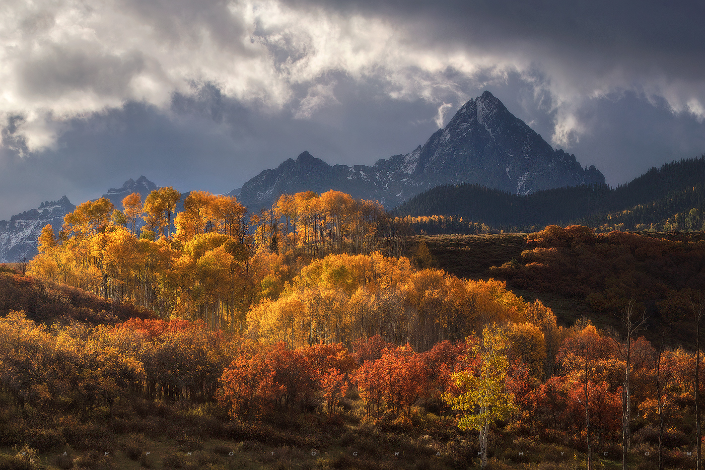 Colorful Aspen trees accentuated by early morning side lighting.  Mount Sneffels shows as a dark , ominous tower.