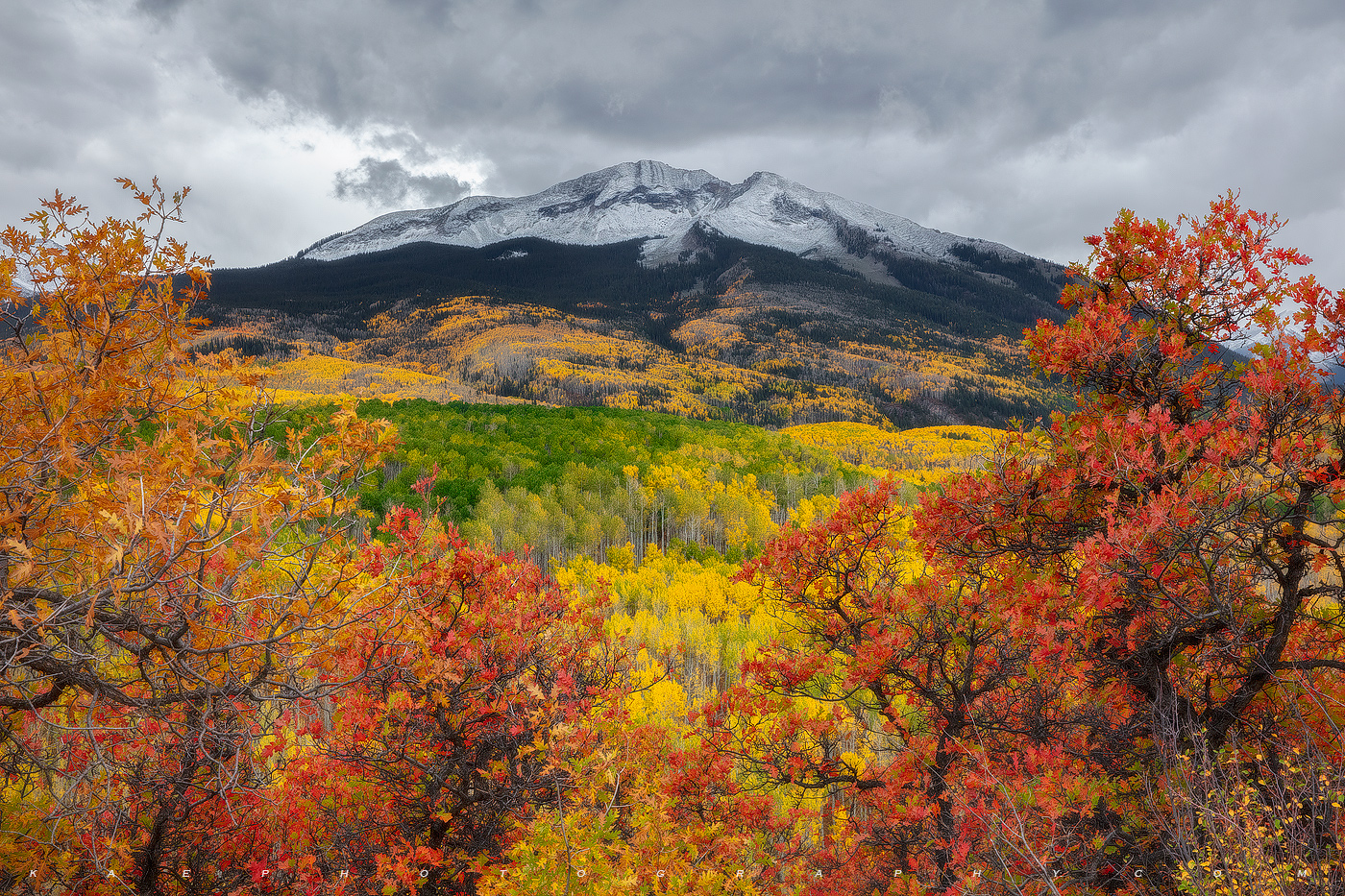 I love the Kebler Pass Road.  Theres always a new scene that pops up every year.  I photographed these warm colors,  of West...
