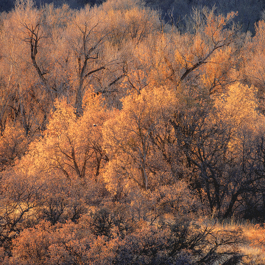 Golden Thickets